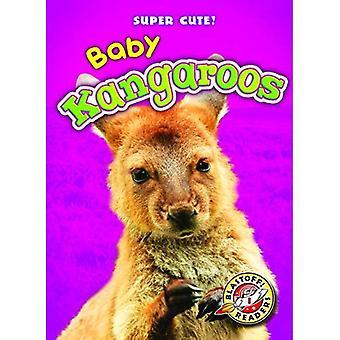 Baby Kangaroos (Super Cute!)
