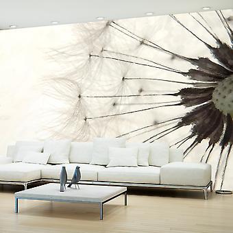 Wallpaper - White Dandelion