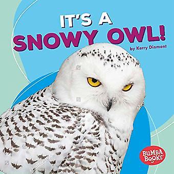 È una civetta delle nevi! (Bumba Books (TM) - animali polari)