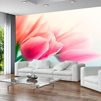 Artgeist Wallpaper Spring and tulips (Decoration , Vinyls)