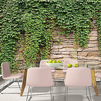 Behang-Ivy Wall