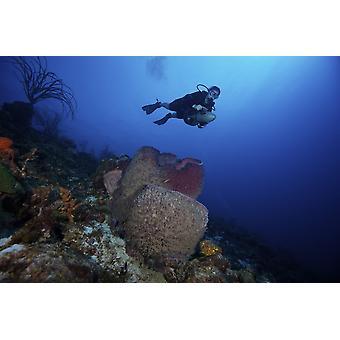 Аквалангист propels над большой баррель губки Бонайре Карибского бассейна Нидерланды Плакат Печать