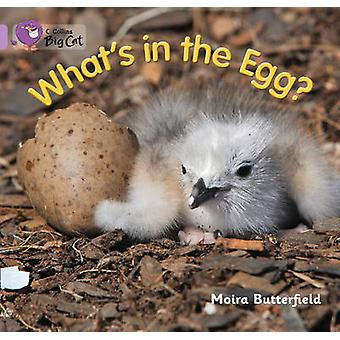 Whats in the Egg by Moira Butterfield & Cliff Moon &  Collins Big Cat