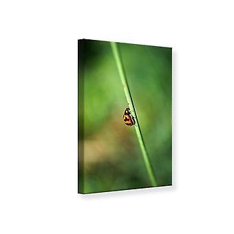 Canvas Print het lieveheersbeestje