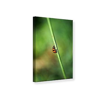 Canvas Print The Ladybird