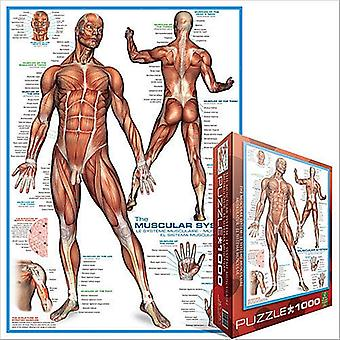 The Muscular System 1000 Piece Jigsaw Puzzle 680Mm X 490Mm