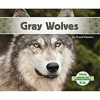 Gray Wolves (Animals of North America)