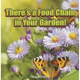 There's a Food Chain in Your Garden!