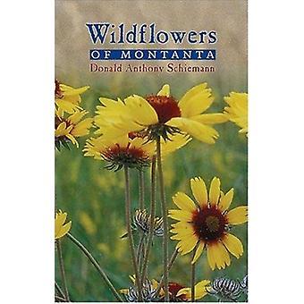 Wildflowers of Montana by Donald Anthony Schiemann - 9780878425044 Bo