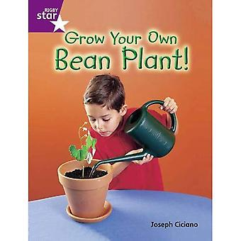Grow Your Own Bean Plant: Purple Level (Rigby Star Guided)