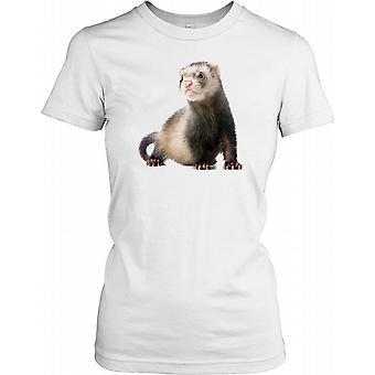 Ferret Looking Around Ladies T Shirt
