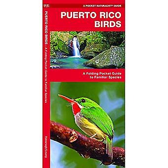 Puerto Rico Birds (Pocket Naturalist Guide)