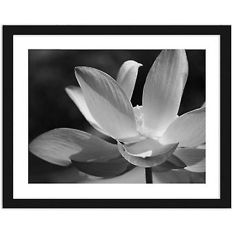 Bilde i svart ramme, hvite liljer