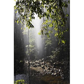 Rainforest Bellingen Australia PosterPrint