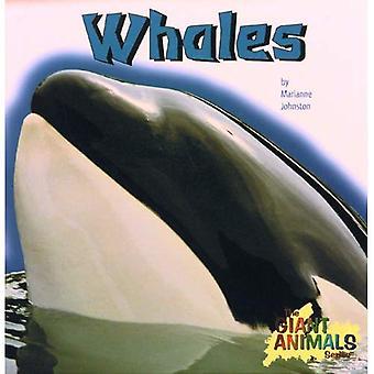 Baleines (Animal géant S.)