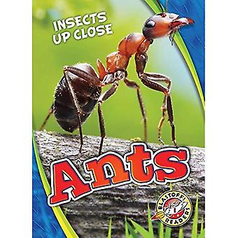 Ants (Insects Up Close)