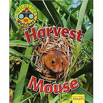 Harvest Mouse (Wildlife Watchers)