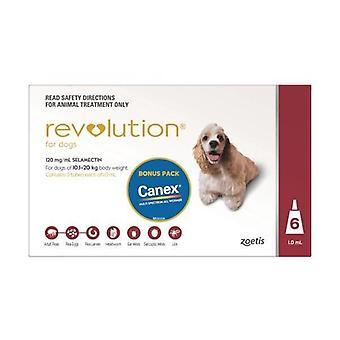 Revolution Red 6 Pack