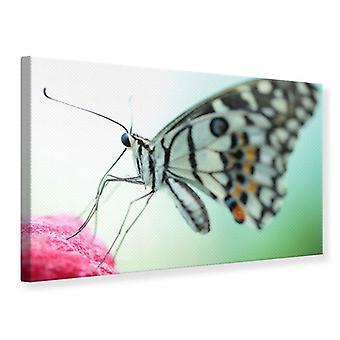 Canvas Print Butterfly XXL