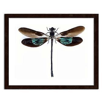 Zdjęcie w Brown Frame, Dragonfly
