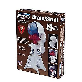 Lindberg Model Kit - Brain/Skull Half - 26cm High - 71306 - New