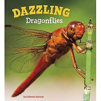 Dazzling Dragonflies (A+ Books: Marvellous Minibeasts!)