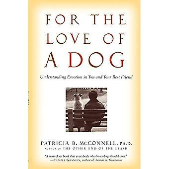 Pour l'amour d'un chien: émotion de compréhension en vous et votre meilleur ami