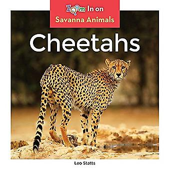 Cheetahs (Savanna Animals)