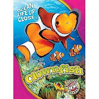 Clownfish (Ocean Life Up Close)