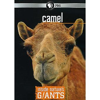 Inside Nature's Giants: Camel [DVD] USA import