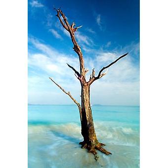 シナモン湾の木 - ネイサン Lovas ポスター ポスター印刷
