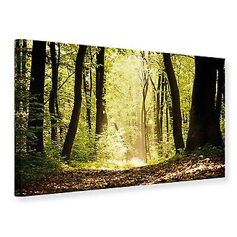 Canvas Print Sunrise In het bos