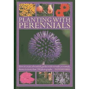 Plantering av perenner: Hur att skapa en vacker trädgård med mångsidig perenner