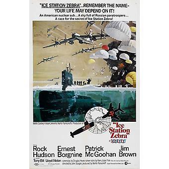 Hielo estación cebra Movie Poster (11 x 17)