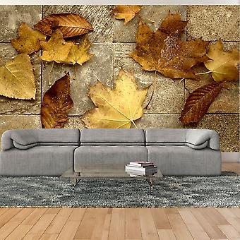 Wallpaper - Harbinger of autumn