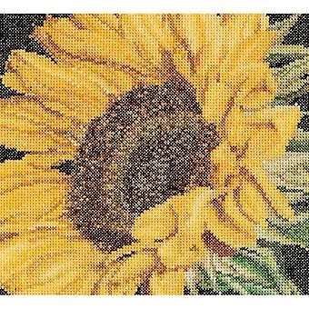 Sunflower On Aida Counted Cross Stitch Kit-6