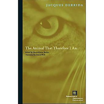 Das Tier, also ich bin (Perspektiven in der kontinentalen Philosophie)