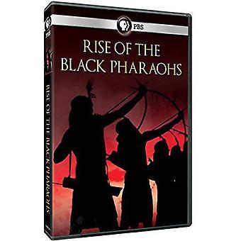 Rise of the Black Pharaohs [DVD] USA import
