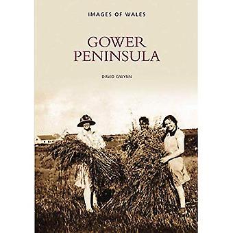 Gower-Halbinsel (Archiv Fotos: Bilder von Wales)