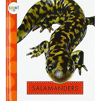 Salamanders (Spot Backyard Animals)