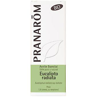 Pranarom Eucalyptus Radiata Essential Oil Bio Sheet 10Ml.