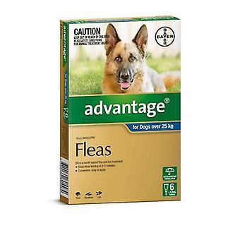 Advantage Blue 6 Pack XL Dogs 25-50kg