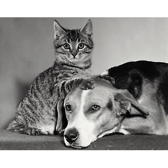 Portrait of a dog and a cat Poster Print