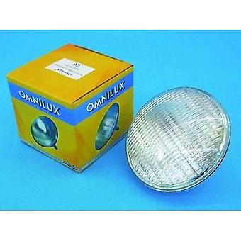 Halogen Omnilux WFL Schwimmbad 12 V G53 STC 300 W White dimmable