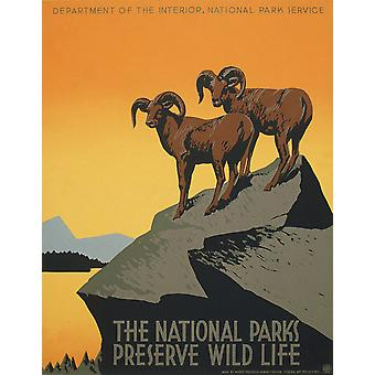 Conservation Mountain National Park Poster Print Giclee