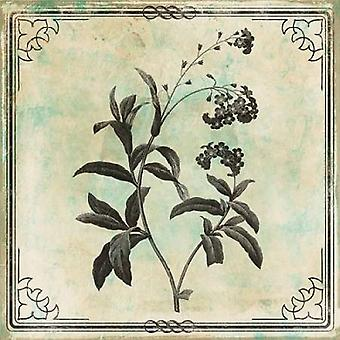 Bordered Stencil Floral Poster Print by Jace Grey