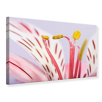 Canvas Print Close Up Exotic Beauty
