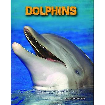 Delfiinit (luonnonvaraisista: merinisäkkäitä)