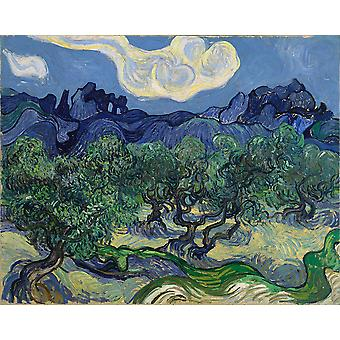 Vincent Van Gogh - The Olive Trees Poster Print Giclee