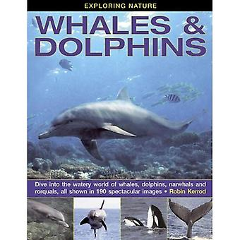 Exploring Nature: Whales & Dolphins: Dive into the Watery World of Whales, Dolphins, Narwhals and Rorquals, All...